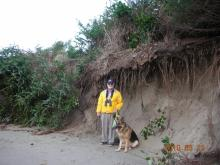 The small forest (Englemann spruce) on top of the foredune is collapsing onto the beach as the foredune is being washed away.
