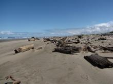 The erosion of the southern foredune has left logs on this southern portion of the beach.