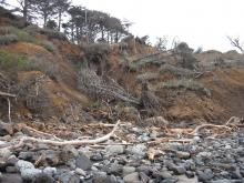 There is a stream falling down this hillside.  The land continues to slide down, taking trees with it.