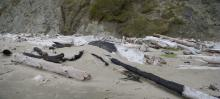 Evidence of a fire in the driftwood pile at the base of the bluff.