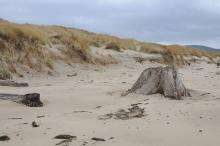 Reference photo of driftwood and sand deposited in front of eroded section of foredune over course of summer, 2010.