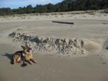 "In center of mile, a short distance of beach sand erosion left a slight ridge, size measureable by german shepherd as ""yardstick"""