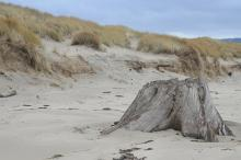 Photo of driftwood stump taken in fall prior to onset of first major winter storm.