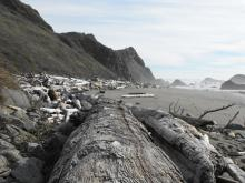 This is the southern section of Lone Ranch Beach.  Large drifwood is always located high on the beach away from the surf line.