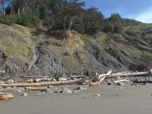 Notice the dirt over the log at the base of this landslide, indicating that it is fairly recent.