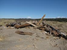Woody debris has been pushed into piles along the eastern edge of the Snowy Plover Habitat Restoration Area