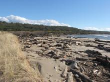 There was a large amount of wood along this part of shoreline.
