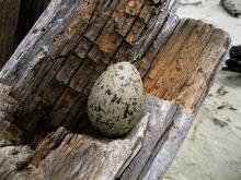 found on beach log