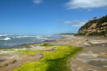 The beach had a patch of seagrass, and the round knobby rocks were showing.