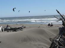 surfers with kites; unusually large  number of people (about 16). (Not all in photo)