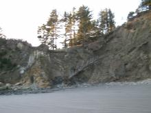 Trees falling, more erosion