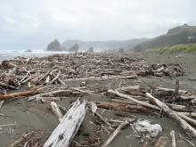 Driftwood redistributed and much newly added.Looking N.from south end of mile 23