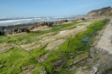 Rocky ledges covered with seagrass are exposed.