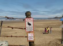"These ""Do Not Disturb the Birds"" signs are a welcome addition at major beach access locations.  It remains to be seen whether they will change peoples' behavior"