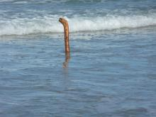 From a distance, this snag looked like either a periscope or the Loch Ness Monster.