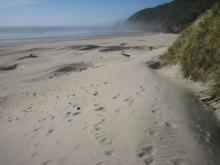 This is a view of the lay of the sand dunes at the high point of the trail where it descends to the beach