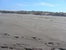 This photo shows the same large log that was first eroded out of the foredune this past winter.  There has been a lot of sand built up on this beach this summer, but this area still has a large embayment.