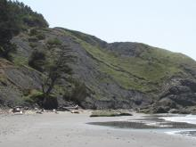At the south end of the Crook Point beach, the hillside is slumping it's way to the beach.