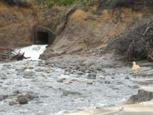 heavy flow of water through culvert a day or so after heavy rains fell in western OR, afaik this is Johnson Creek.