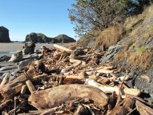 Middle Mile 20 has lots of new driftwood pushed by the high surf up against the headland.