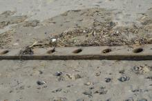 This piece of wood washed up on Feb 2, 2013