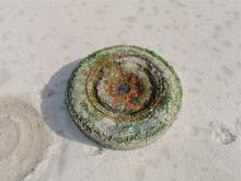This has been in the ocean for some time