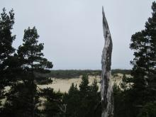 View from the trail leading to the shore