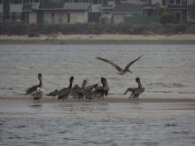 Birds enjoying the afternoon