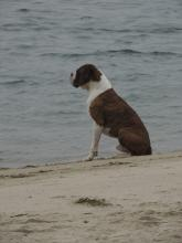 He was So well minded.Just watching the Ocean while his friend/owner was fishing!