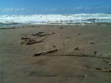 Beach was littered with nature's debris after three days of storms.