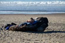 As testament to the lovely weather, this back packer slept peacefully in a comfortable cranny of driftwood.