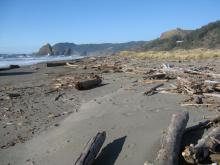 Driftwood strewn before a wave cut foredune; looking north