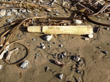 Seen on the beach after the 9-28-13 storm.  Removed not long after this photo was taken.