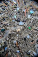 The high tide line was littered with small plastics.