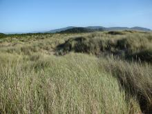 A shot taken looking south in the dune area behind the foredunes along mile 288.