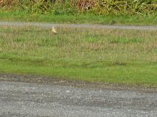 Meadowlark at parking for Arizona Beach