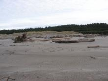 This picture is taken at the southern end of Mile 96.  The ocean has overwashed this area, leaving lots of wood.