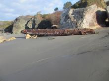 Giant log resting on rocks and tree limbs after wave action from December King Tides and high surf from recent storms.