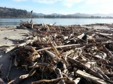 Pile of wood pieces on the Siletz Bay side of the Salishan Spit