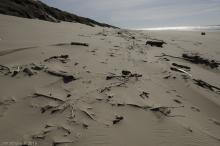 South of parking lot 3 access, driftwood being covered by sand.