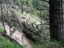 "New trees down in slide"" ""Directly south of beach access trail"