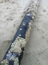 Here's a close-up shot of the length of PVC pipe we found on the beach.