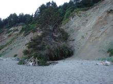 campfire hazard at north end of Roads End beach