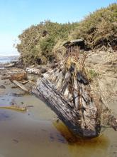 Will have to research this.  Unknown beached or wrecked vessel skeleton embedded in foredune.