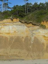 Beach bluff near south end of mile, easily distinguished strata.  Erosion demonstrated by mats of salal, edges dying, and sediment of upper strata showing as the strata crumbles and slides/rolls down lower strata.