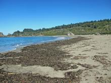 Mile 7, Kelp and seagrass accumulation in the driftline at approximately mid-mile.
