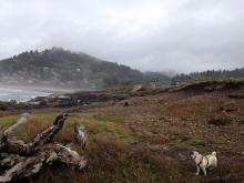 Looking north from Agate Cove toward town of YAchats.
