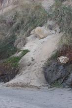 "More erosion below ""yellow house"""