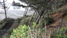 Arcadia Beach access trail landslide.