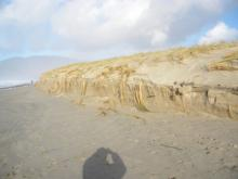 Sand dune erosion due to recent high tides and storms.